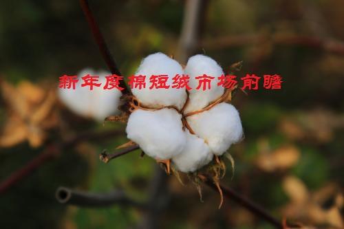 新年度棉短绒市场前瞻